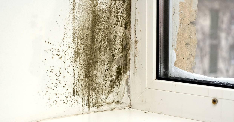 Средство от грибка и плесени на окнах
